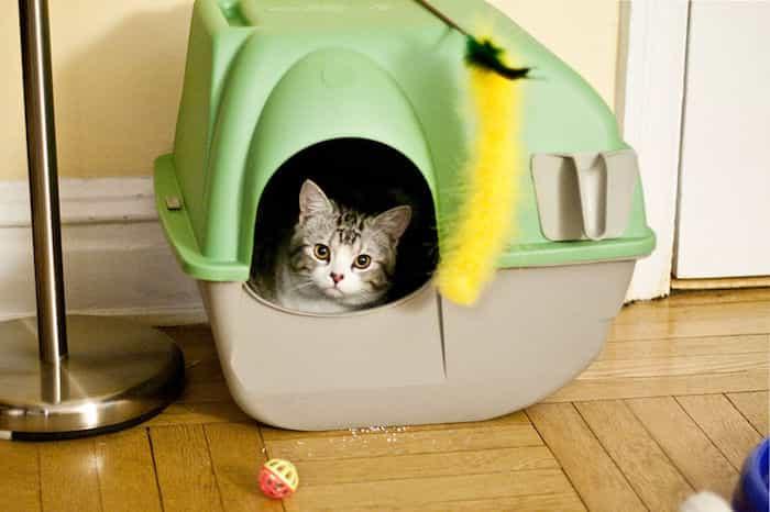 Un gato dentro de un arenero cubierto aprendiendo donde hacer sus necesidades