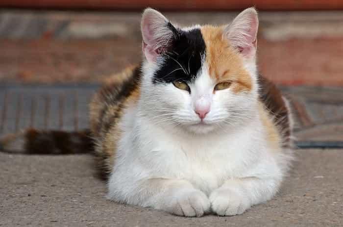 Un gato observando que pasa a su alrededor