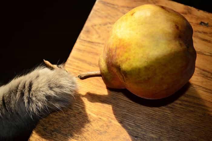 La pera como premio para tu gato