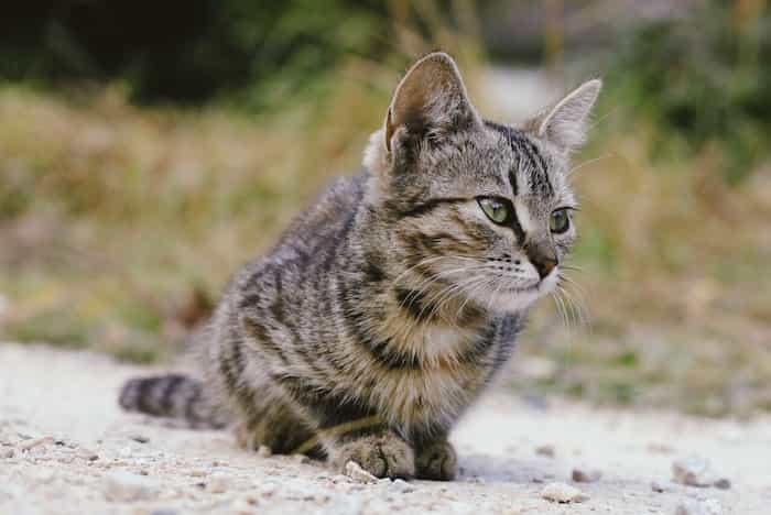 Gato que prefiere hacer sus necesidades en el exterior