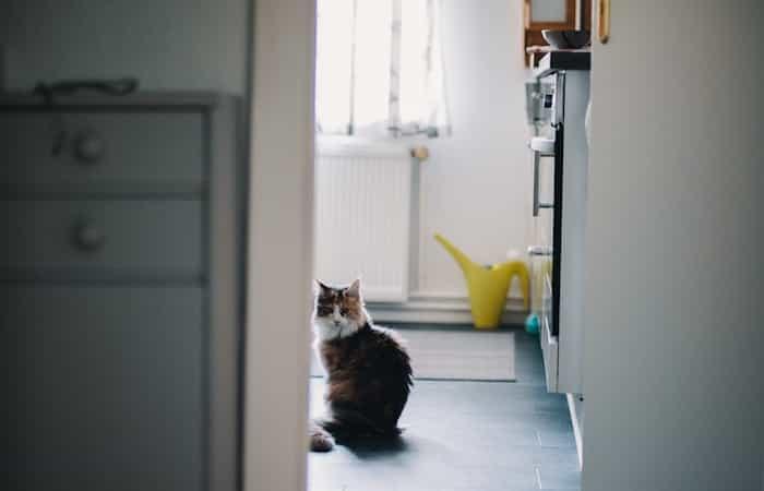 Gato en un lugar limpio