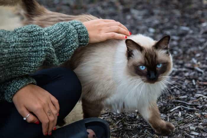 Un gato con su dueña a quién recuerda