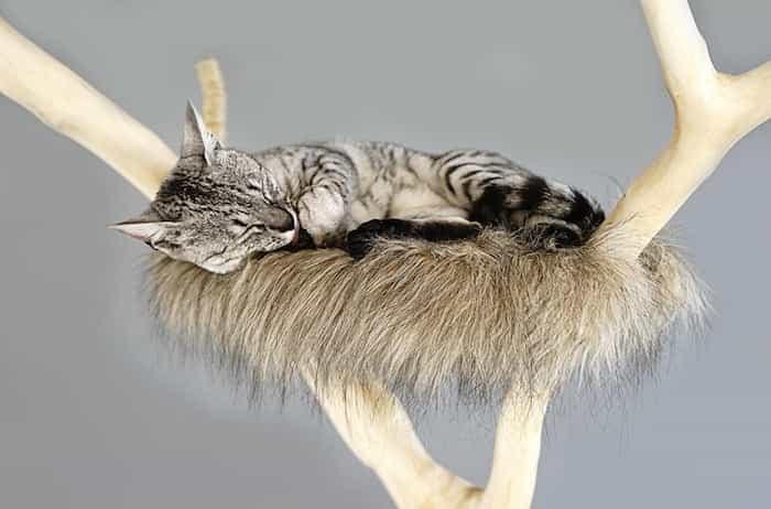 Gato durmiendo en un árbol natural para gatos
