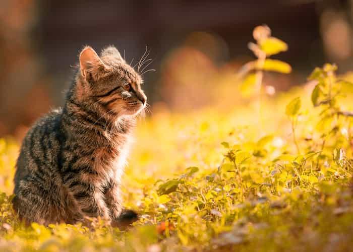 Un gato en el jardín de casa que sale en busca del arenero.