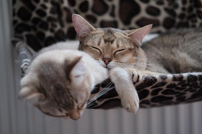 Gatitos durmiendo en una cama hamaca colgante