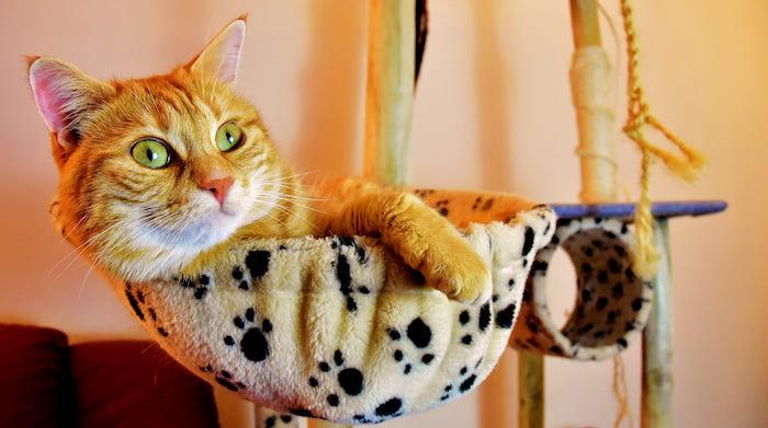 Gato en la cama colgante de su árbol para gatos.