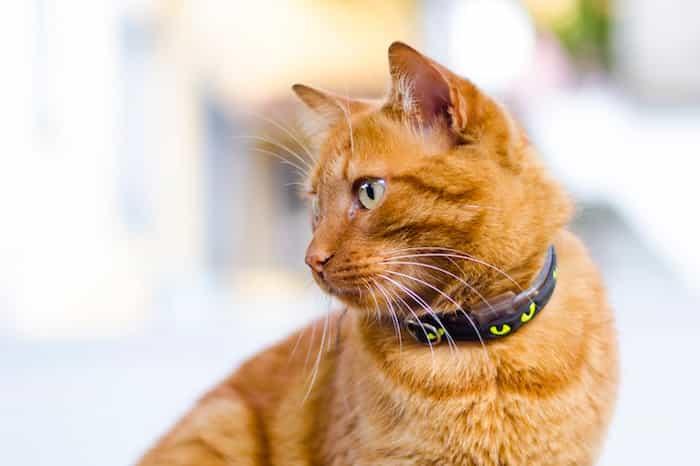Gato con collar de diseño con un estampado