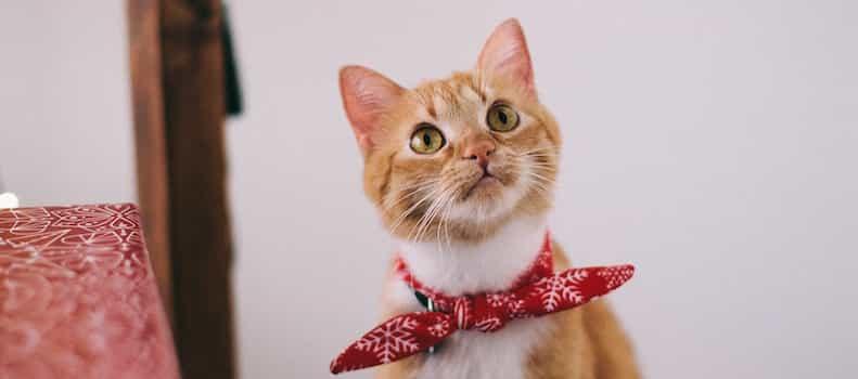 Gato con un collar de diseño original con una pajarita