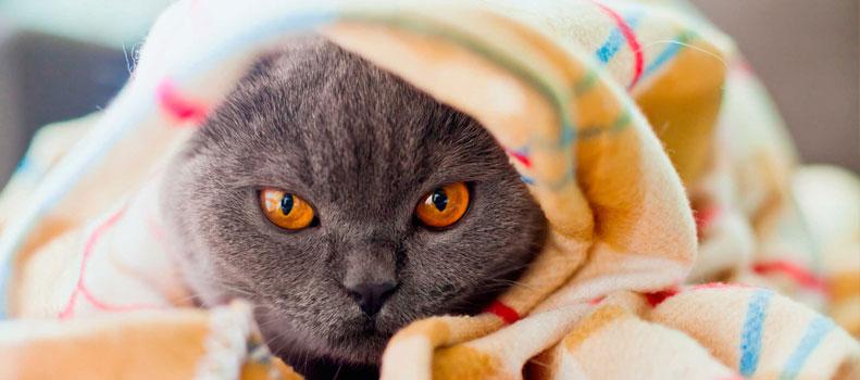 Gato comportándose de forma huidiza
