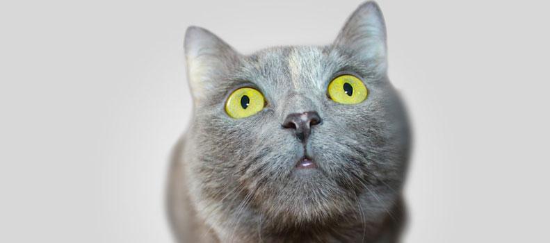 Un gato mirando con curiosidad