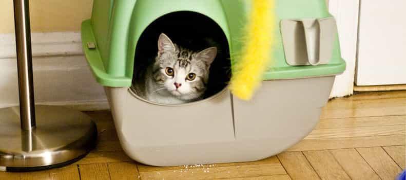 Un arenero de gato puesto en un lugar cómodo.