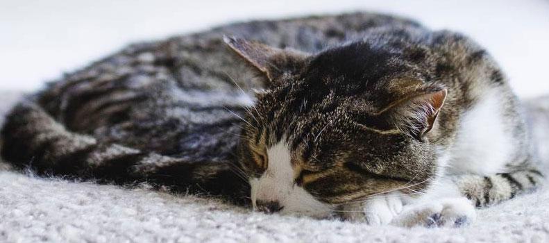 Un gato a durmiendo en una cama para gatos