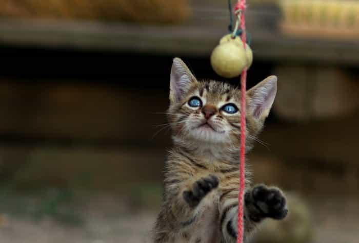 Gato jugando con un juguete casero hecho de lana.