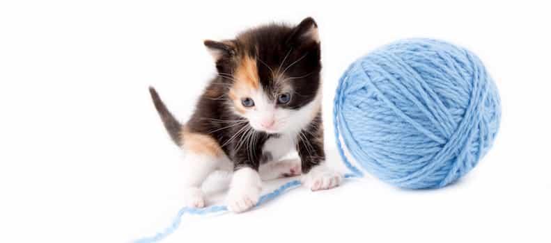 Gato con su juguete de ovillo de lana.