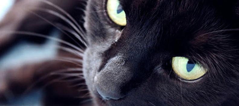 Un gato negro observando y memorizando