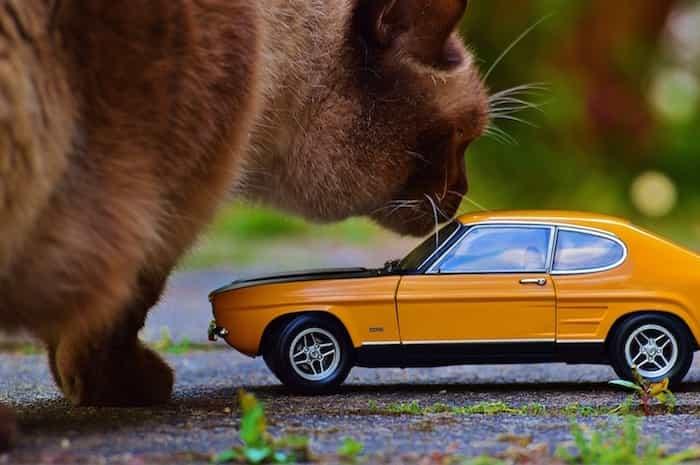 Gato jugando con un coche de juguete