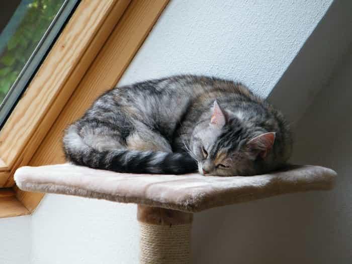 Gato durmiendo en una torre de juegos para gatos