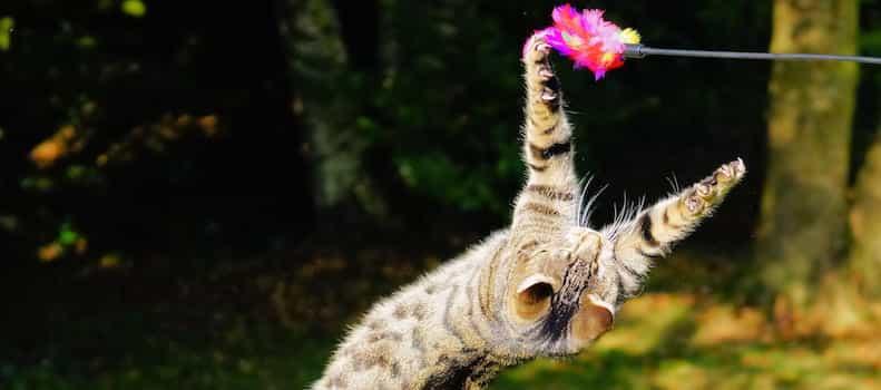 Un gato jugando con un juguete interactivo e inteligente