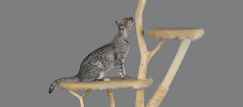 Un gato subido en su árbol rascador