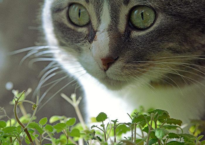 Un gato junto a hierba para gatos