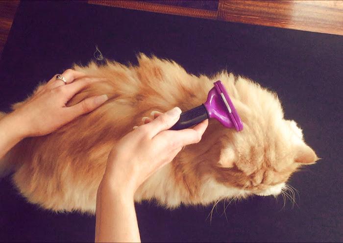 Cepillo fuminator para gatos