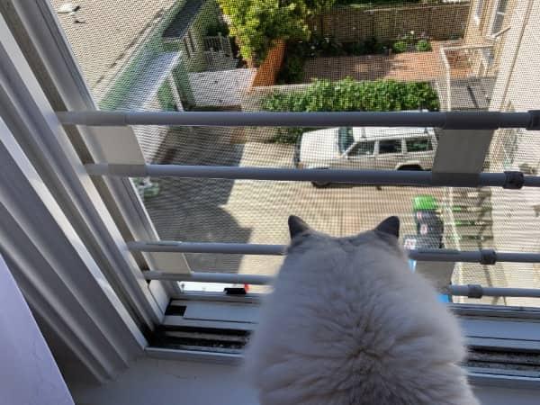 Mosquiteras como protección anticaísdas para gatos.
