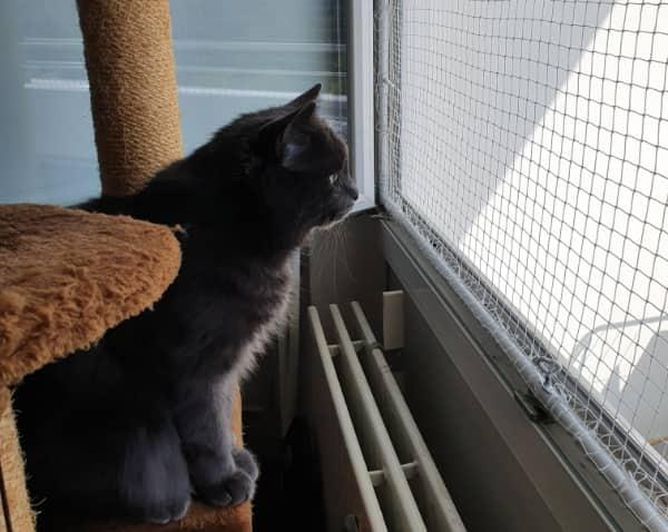 Redes de protección para gatos