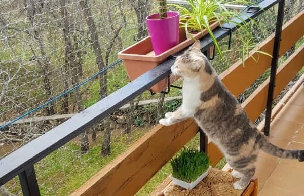 Cerramiento de terraza para gatos
