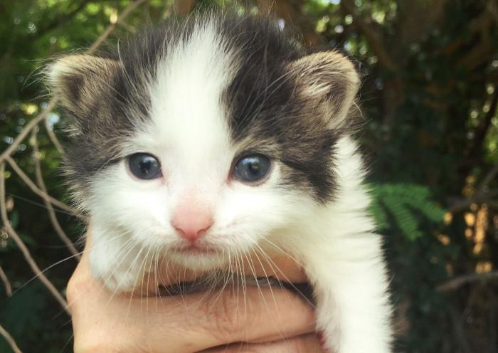 Gatito pequeño adoptado