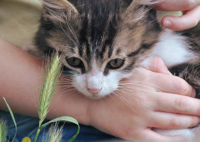 Gatito tumbado sobre un niño