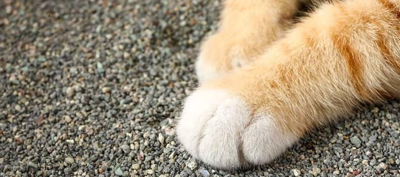 Arenas aglomerante para gatos