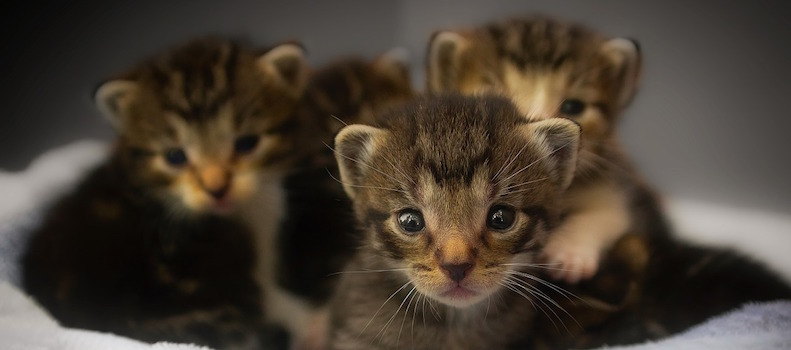 Gatos pequeños esperando para comer