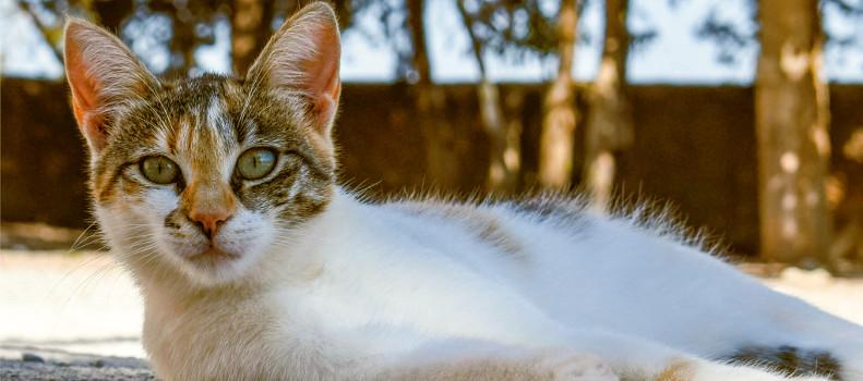 Gato callejero adoptado