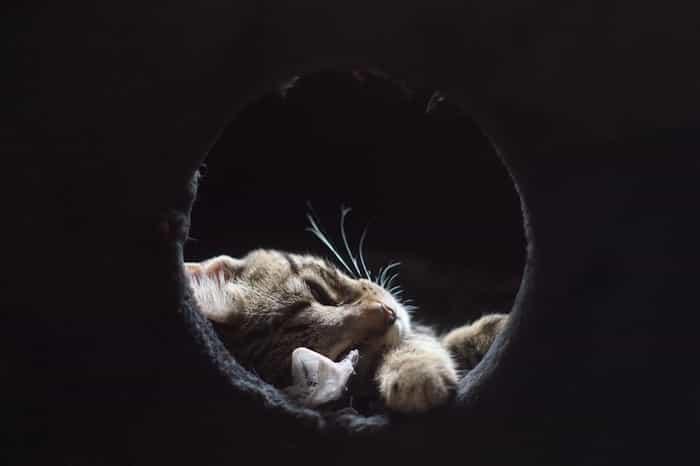 Gato en su casita hecha en casa