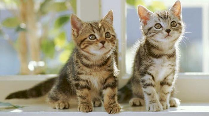 Dos gatitos adoptados