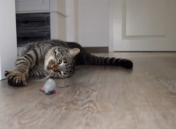 Gato jugando con un ratón de trapo