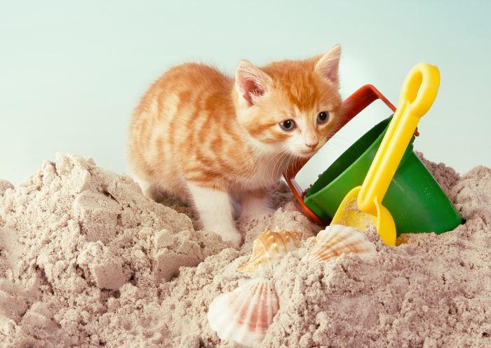 Gatito jugando en arena
