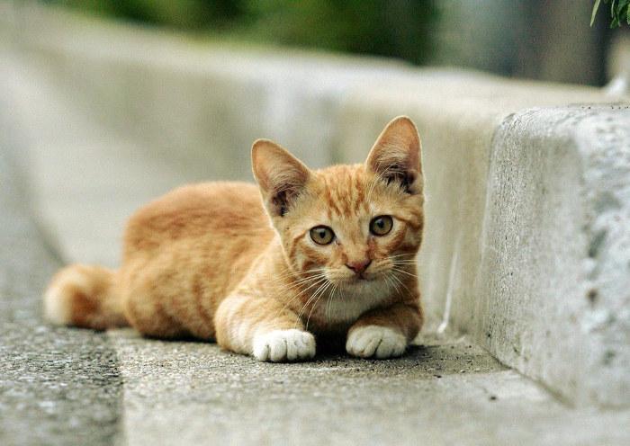 Gatito adoptado de la calle