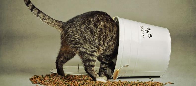 Gatito comiendo pienso para gatos cachorros
