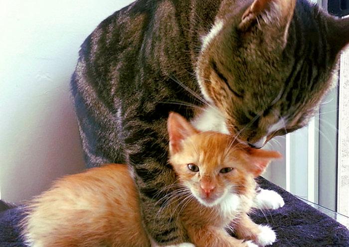 gatito cachorro con un gato adulto en casa