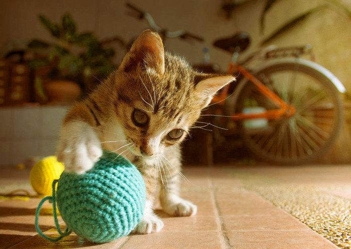 Gatito jugando con una pelota de lana
