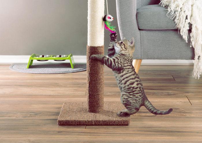 Gato rascando un poste en el salón de casa
