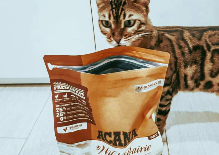 Gato oliendo el pienso Acana