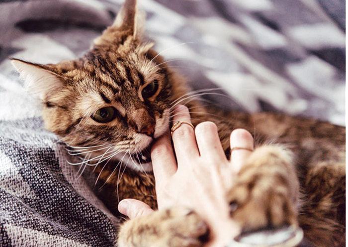 Gato mordiendo la mano de su dueño