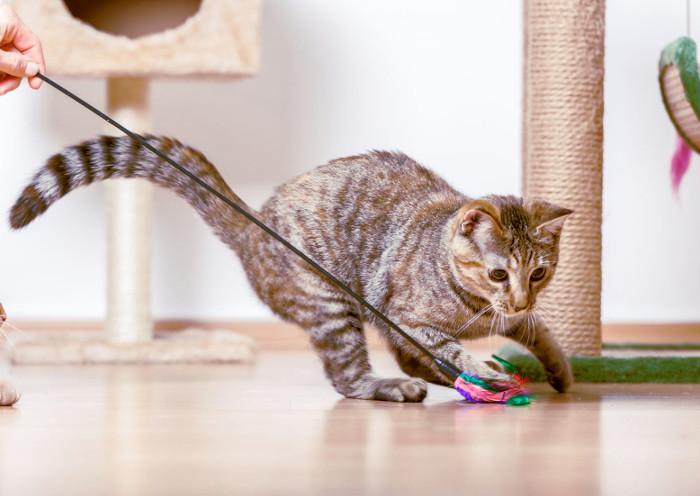 Gato jugando con una pluma