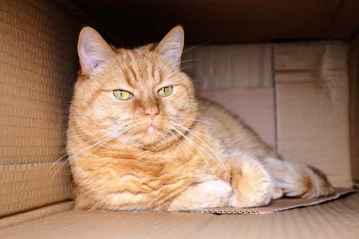 Gato descansando en una casita de cartón casera