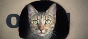 Gato asomándose desde su casita para gatos