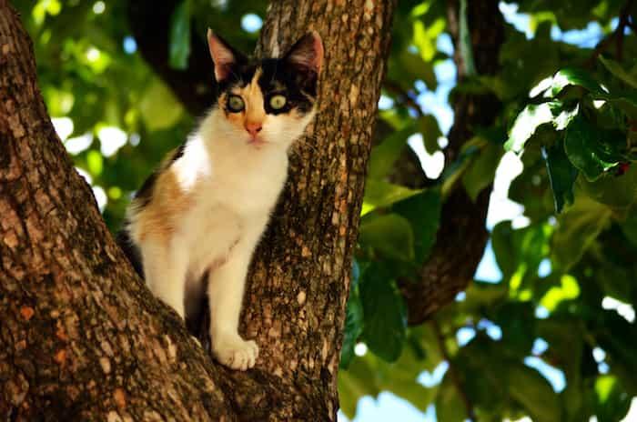 Gatito perdido y subido a un árbol
