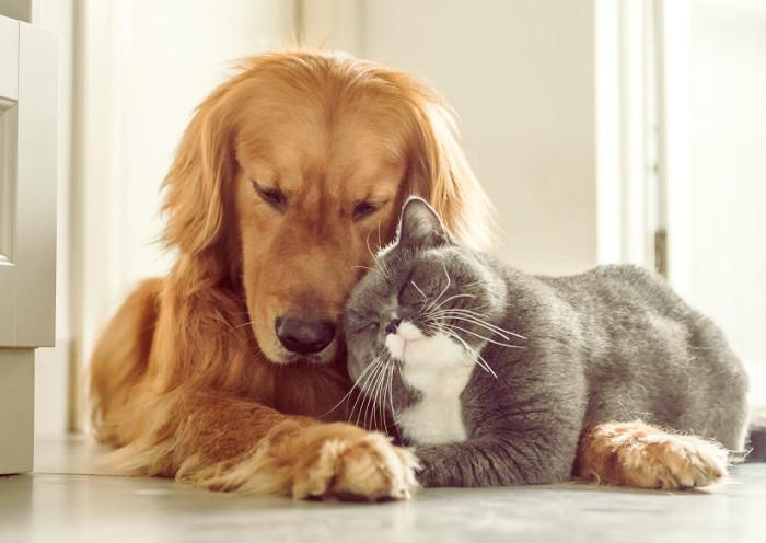 Un gato y un perro conviviendo juntos en la misma casa