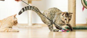 Aprender a jugar con gatos
